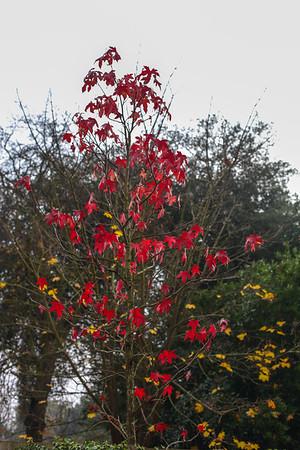 An Autumn Walk - Christchurch Park