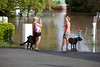 Spectators even brought their dogs into Ipswich CBD to check out the flood waters at Wharf St - 12 Jan 2011