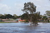 Bremer River from the end of Perry St Churchill - 12 Jan 2011
