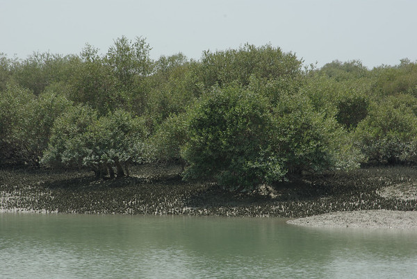 Las namorzynowy i jego mieszkancy