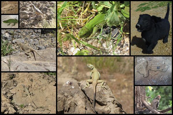Zwierzaki zyjÄ…ce w okolicach jeziora Gahar