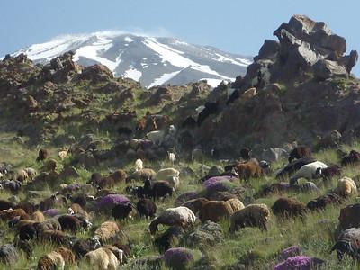 Po drodze do base camp mija sie pastwiska