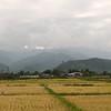 The rice fields along the Caspian Sea coast