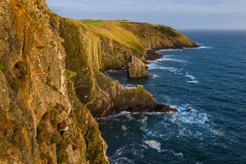 Old Head Cliffs, Ireland