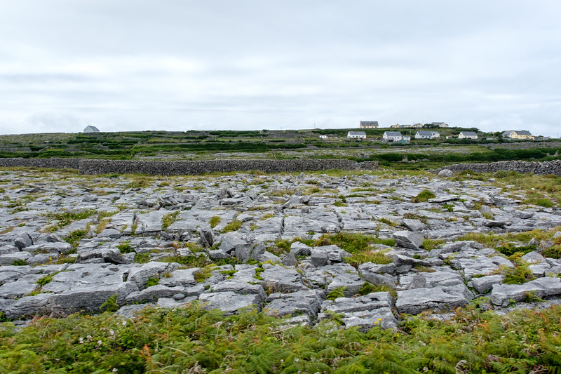 This is what a field looks like in its natural state.  The Aran Islands are an extension of The Burren, which is made up of limestone hills and mountains.  The locals dig those stones out with hand tools to reveal the soil.  The rocks are used to build the stone walls and the newly liberated soil is used for rotating crops and grazing.