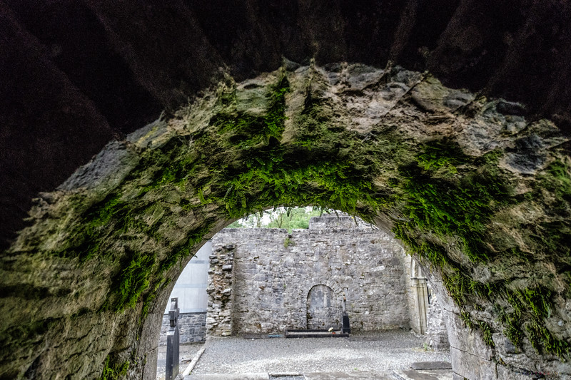 Ferns clinging to the top of the arch in Cong Abbey