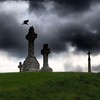 Graveyard with crows