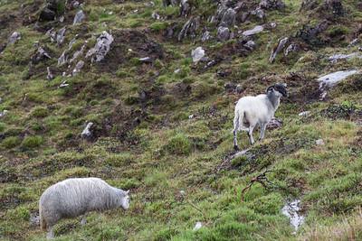 Beara Peninsula Ireland July 2013 -002