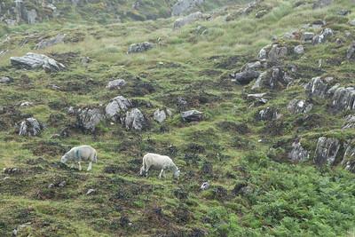 Beara Peninsula Ireland July 2013 -003