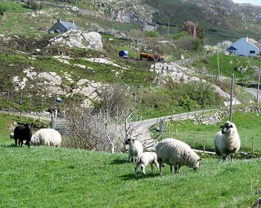 Farm near Shronebirrane Stone Circle, County Kerry, Ireland