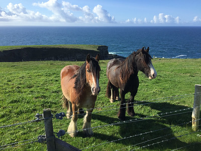 Horses at Mizen Head