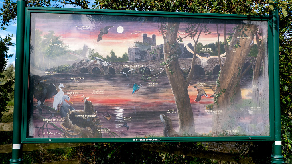 Things to do in Adare - Adare River Bank Walk - What to do in Adare - Countryside - Birds of Adare
