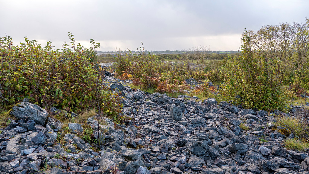 Burren National Park: Walking in the Burren for Desolate Irish Landscapes - White Trail - Nature Trail