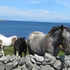 Galway & Connemara Coast : 4 galleries with 120 photos