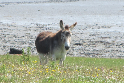 . . . and a wild Irish, um, donkey.