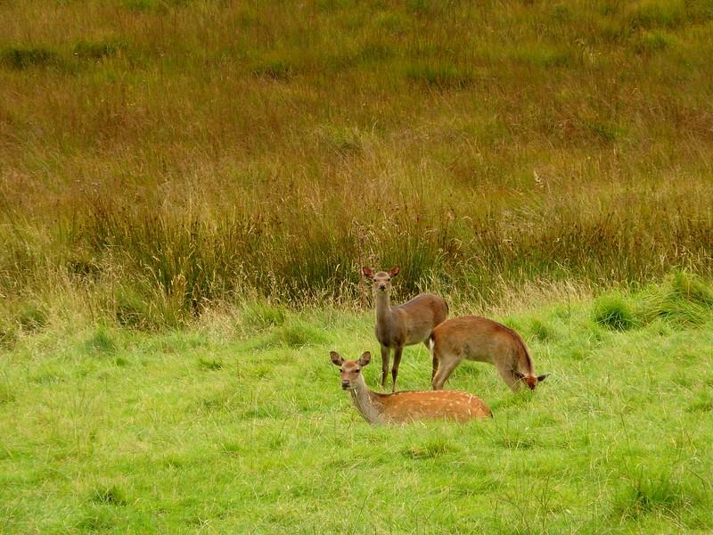 Wildlife in Glendalough - we spotted deer!