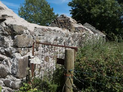 Hedgerow, County Antrim