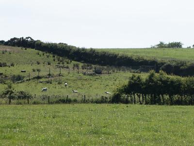 Hedgerow. County Antrim.