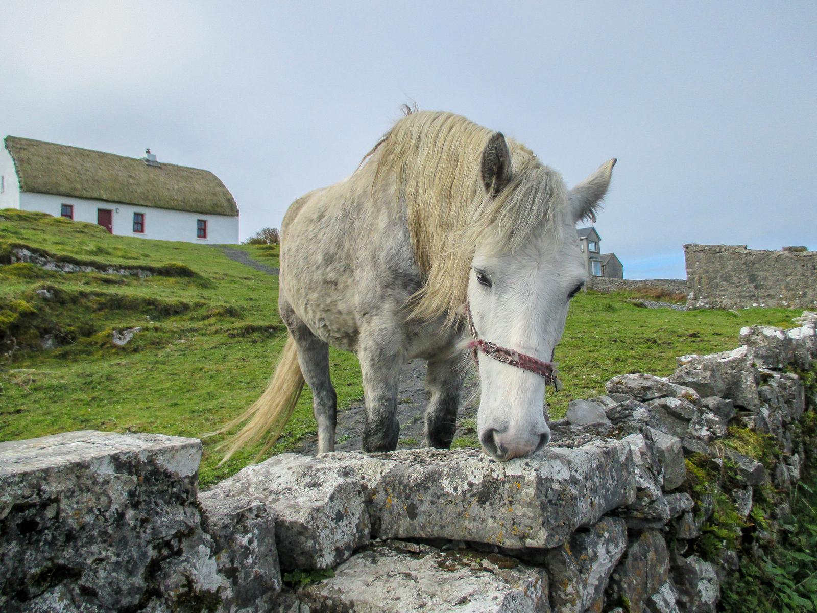 got 7 Days in Ireland? don't miss the aran islands!