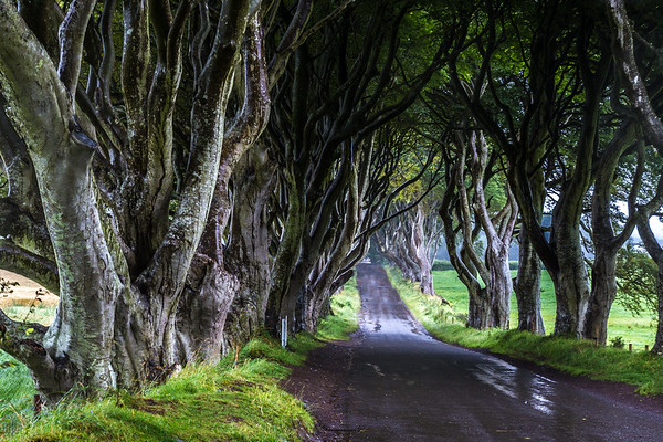 The Dark Hedges - Game of thrones - Kings Road - Ballymoney County Antrim Ireland - 3
