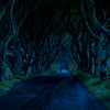 The Dark Hedges - Game of thrones - Kings Road - Ballymoney County Antrim Ireland - evening
