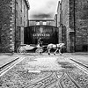 Guinness brewery - St James gate Dublin - horse and carriage - red jacket - 2 - BW