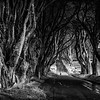 The Dark Hedges - Game of thrones - Kings Road - Ballymoney County Antrim Ireland - 3 - BW Wet Rocks