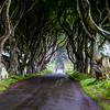 The Dark Hedges - Game of thrones - Kings Road - Ballymoney County Antrim Ireland - 2