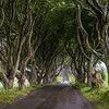 The Dark Hedges - Game of thrones - Kings Road - Ballymoney County Antrim Ireland