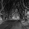 The Dark Hedges - Game of thrones - Kings Road - Ballymoney County Antrim Ireland - BW