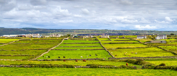 Irish fields divided and surrounded by stone walls with cows in the forefront and houses and mountains in the rear County Clare - Ireland