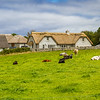 Cows in front of thatched roof houses in County Clare - Ireland