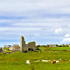 Cows in Irish field with houses and old ruins - County Clare - Ireland