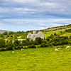 Cows in field with old ruins in valley in County Clare - Ireland