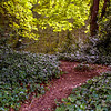 Iveagh Gardens - Dublin - Sun through the leaves on a path