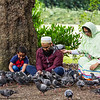 Family interacting with doves in St Stephens Green - Dublin