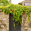 Irish Ivy over a black door in a stone wall - Dublin Ireland - Portrait