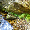 Water running past rock with moss and ferns - County Wicklow Ireland