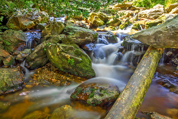 Powerscourt river flowing down rocks and log - County Wicklow Ireland