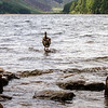 Duck in Glendalough Lake looking towards valley