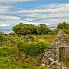 Old ruins in Irish wild growth - Ireland