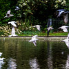 Birds flying over pond in St James Green
