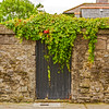 Irish Ivy over a black door in a stone wall - Dublin Ireland