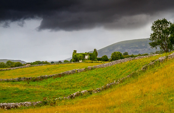 Old house covered in Ivy in Irish field with stone walls