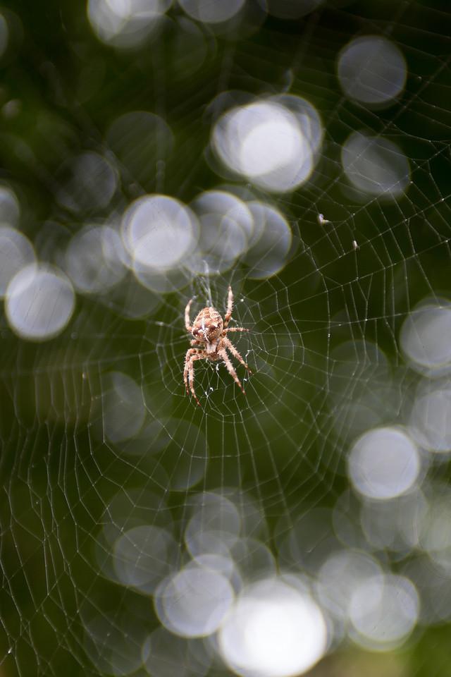 Dublin Spider