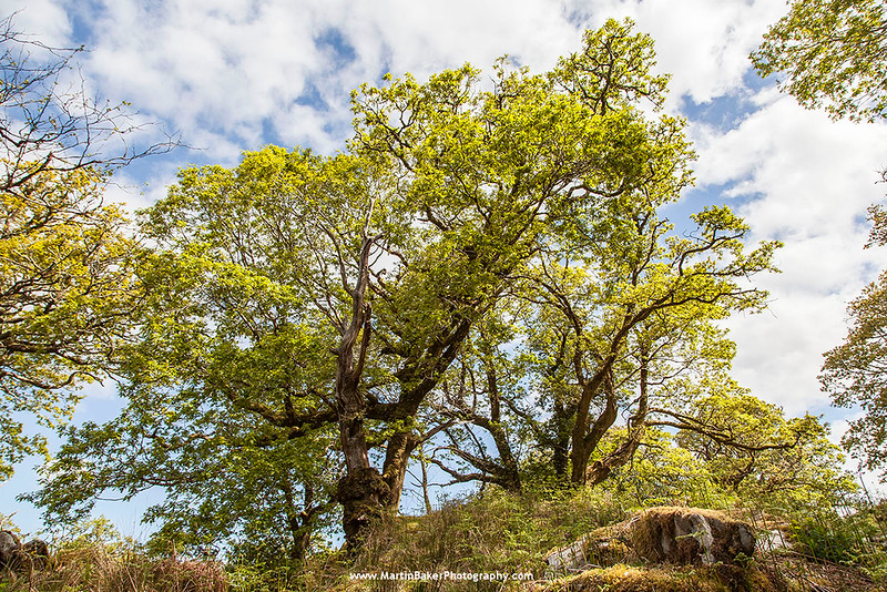 Gortnacarriga, Killarney National Park, Killarney, Kerry, Ireland.
