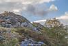 Goats, Killarney National Park, The Iveragh Peninsula, Kerry, Ireland.