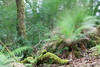 The Derreen Garden, Lauragh, Beara Peninsula, Kerry, Ireland.