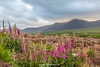 Brandon Peak, Cloghane, Dingle Peninsula, Kerry, Ireland.