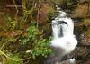 Brackloon, Killarney National Park, Killarney, Iveragh Peninsula, Kerry, Ireland.